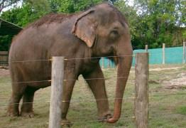 Justiça Federal decide nesta sexta-feira futuro da elefanta Lady