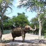 elefanta lady   foto secom jp 2 - Justiça decide nesta sexta-feira se elefanta Lady fica na Bica ou será levada para Santuário