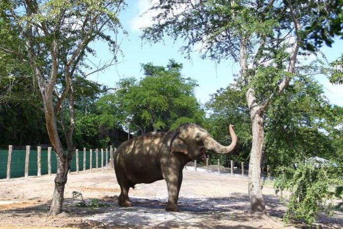 elefanta lady   foto secom jp 2 - PMJP e Santuário dos Elefantes firmam pré-acordo sobre destino da elefanta Lady
