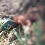 morto mandacaru - Corpo de adolescente é encontrado dentro de viveiro de camarão em João Pessoa