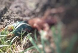 Corpo de adolescente é encontrado dentro de viveiro de camarão em João Pessoa