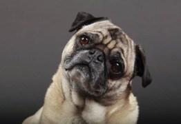 Empresa chinesa se prepara para clonar memórias de animais de estimação
