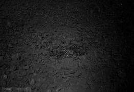 GOSMA OU VIDRO LUNAR: Entenda o mistério em foto de missão chinesa no lado oculto da Lua