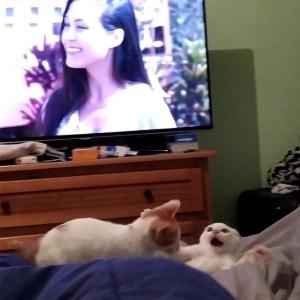 00ma0ixdciguzaoidi3ahtkqm - Gatos são obrigados a 'fazer as pazes' e dona registra momento