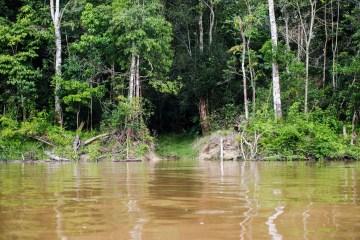 1020835 amazonia 1253 - Capes deve liberar R$ 7 milhões para pesquisas na Amazônia Legal