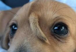 UNICÓRNIO?! filhote de cachorro com rabo na cabeça viraliza na web