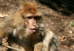 Macaco mata bebê de quatro meses com pedrada