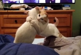 Gatos são obrigados a 'fazer as pazes' e dona registra momento