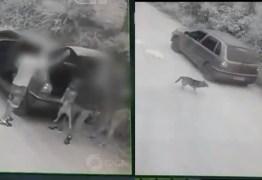 MULTA DE R$3 MIL E PRISÃO: Casal que abandonou cachorro em estrada é identificado pela polícia