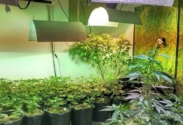 'REIS DOS SKUNKS': Polícia desarticula laboratórios em João Pessoa que distribuíam drogas para todo o Nordeste