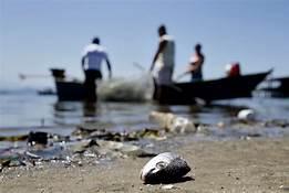 th 2 - Estudo mostra que peixe de áreas atingidas por óleo pode ser consumido