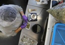 Governo já gastou R$ 2,9 milhões com remédios à base de maconha medicinal