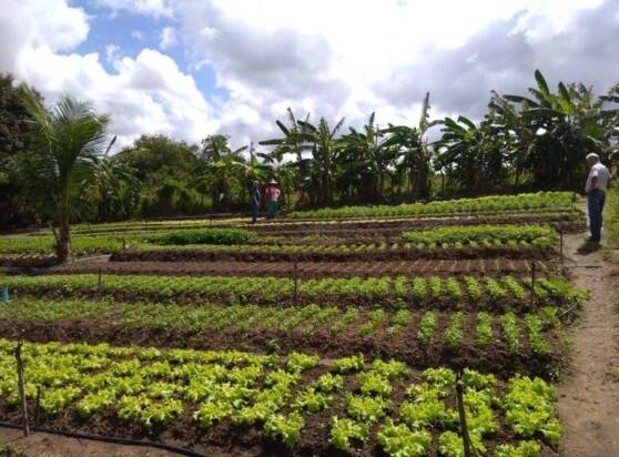 horta - Agricultores de Sapé usam energia solar e economiza 95% na conta de luz