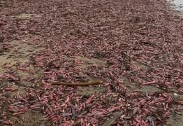 Praia da Califórnia é invadida por peixes-pênis após forte tempestade