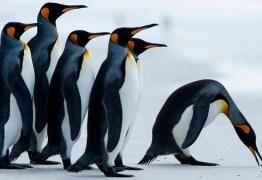 Pesquisador diz ter testemunhado estupro coletivo, necrofilia e prostituição entre pinguins