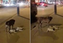 Cão fiel tenta 'acordar' amigo morto em calçada