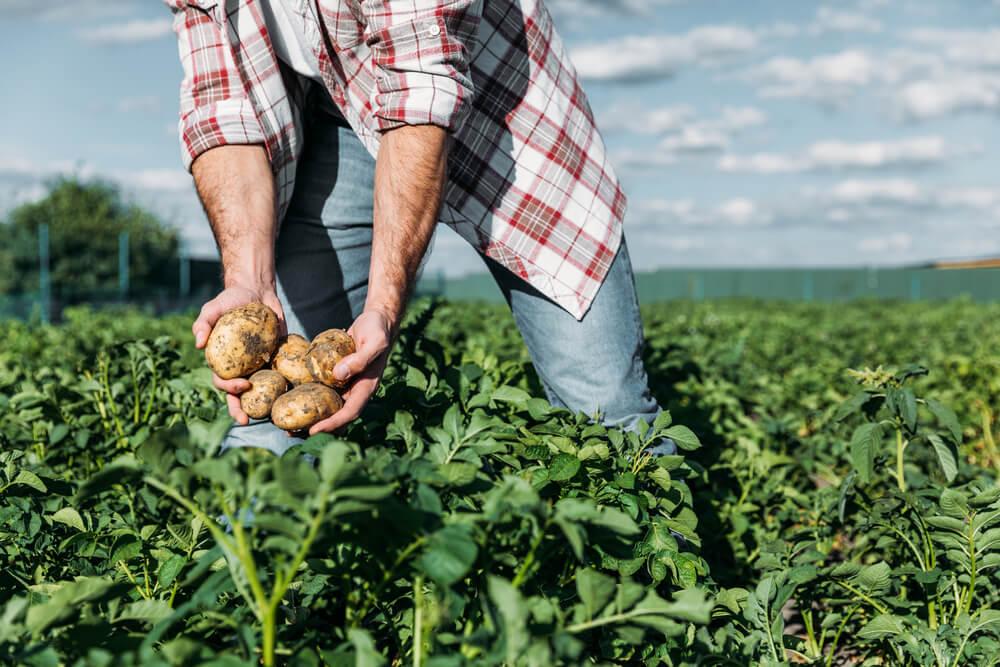 desperdicio na agricultura como evitar as causas mais comuns - Ministério da Agricultura abre inscrições do Garantia-Safra na Paraíba