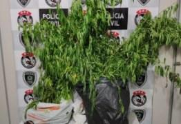 Homem é preso com plantação de maconha em casa em Campina Grande