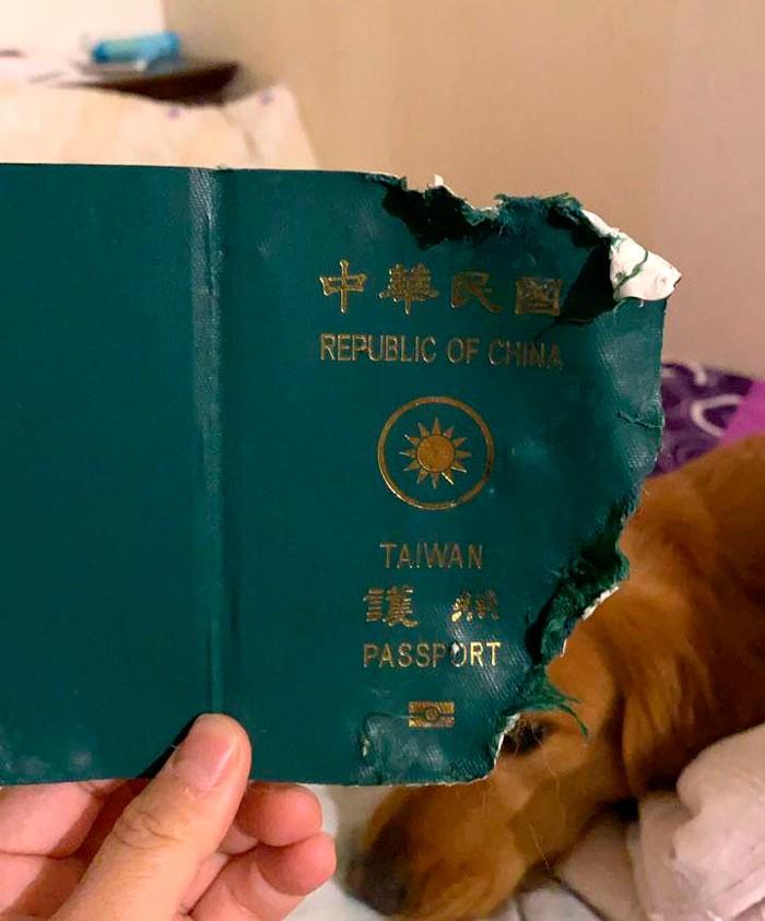 passaporte7 2 1 - 'ANJO DA GUARDA': Mulher se livra de viagem ao epicentro do coronavírus após cachorro morder passaporte