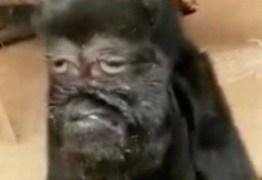 ATRAINDO FIÉIS: cabra com 'face humana' é reverenciada como 'avatar de Deus'