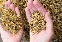 3269089 487550 separating the wheat from the chaff - CASA DE EPITÁCIO PESSOA: Não vão separar o joio do trigo? - Por Júnior Gurgel