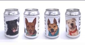 cachorro na cerveja 300x161 - Dona de cão reconhece animal em foto impressa em lata de cerveja