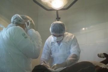 cntro zoono - Centro de Zoonoses de Campina Grande realiza castração de animais