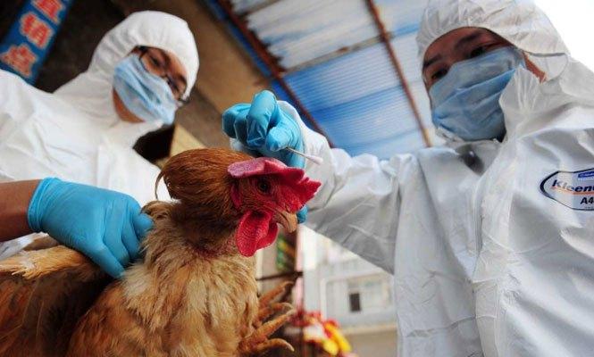 gripe aviaria - ALERTA: China tem primeiro caso no mundo de gripe aviária H10N3 em humanos