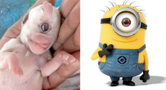 minion - Viral: cachorro nasce com um olho e é batizado de Minion