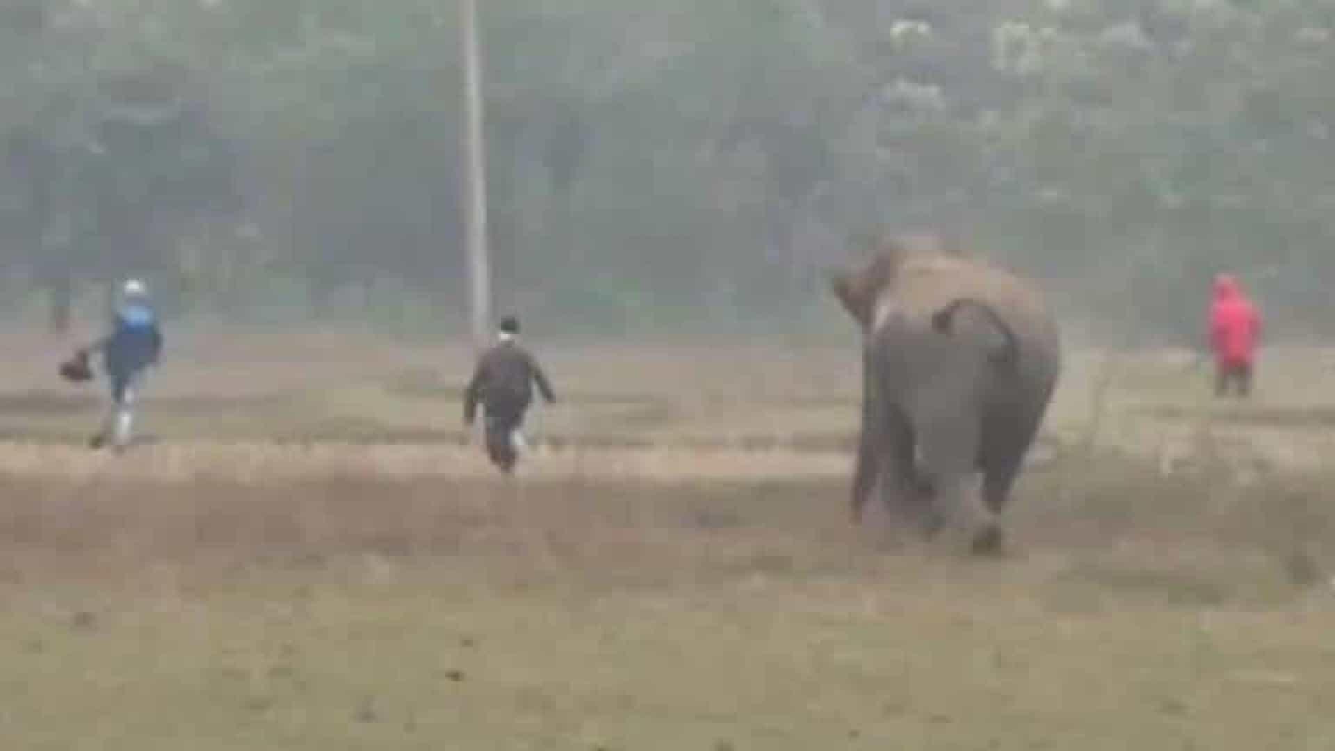 naom 5e208603e1487 - Homens são perseguidos por elefante após tentar tirar selfie com animal