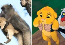 Macaco reproduz cena de 'Rei Leão' em parque africano