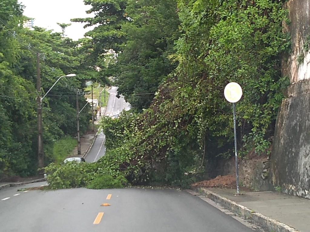 051e9f46 b050 4f29 8451 9637a5b75957 1024x768 - FORTES CHUVAS: Árvore cai durante a madrugada e interdita rua em João Pessoa