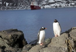 Degelo das calotas polares ocorre 6 vezes mais rápido que nos anos 90