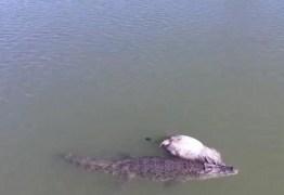 Crocodilo ataca e devora vaca em rio na Austrália: VEJA VÍDEO