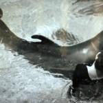 2u3drz2ddvn15jip5yrp0xh5h - Mulher admite que fez sexo com golfinhos a pedido da NASA