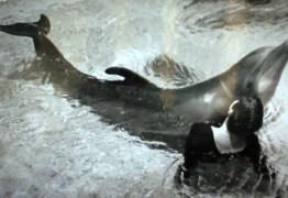 Mulher admite que fez sexo com golfinhos a pedido da NASA
