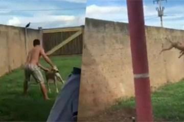 Homem é preso após arremessar cão por cima de um muro de 2 metros