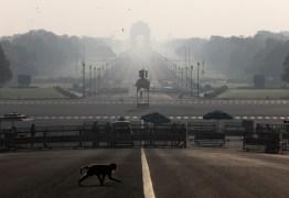 MEDO: macacos pegam amostras de sangue com coronavírus na Índia e fogem