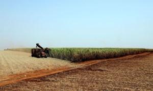 plantacao de soja soja agricultura1103209901 300x179 - Preços mundiais de alimentos caem acentuadamente em abril