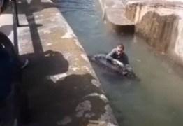 Homem pula em cercado de ursa em zoo e tenta afogar o animal – VEJA VÍDEO