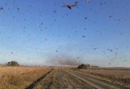 Nuvem de gafanhotos está na zona rural da Argentina