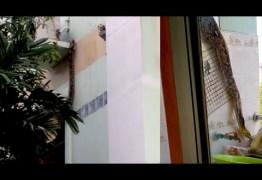 Píton de mais de 4 metros é flagrada escapando pela janela de apartamento