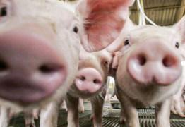 'Potencial pandêmico': novo vírus da gripe é detectado em porcos na China, dizem cientistas