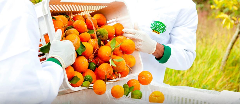 unnamed 1 1 - Sesc participa de webinar do CEBDS sobre desafios do setor de alimentos na fase pós-pandemia