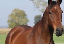 Tribunal de Justiça de São Paulo concede habeas corpus inusitado a cavalo