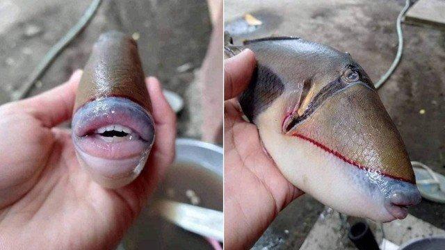 xblog fish.jpg.pagespeed.ic .Gxnq 3XxwB - Peixe com 'dentes humanos' e 'lábios com preenchimento' viraliza e é identificado