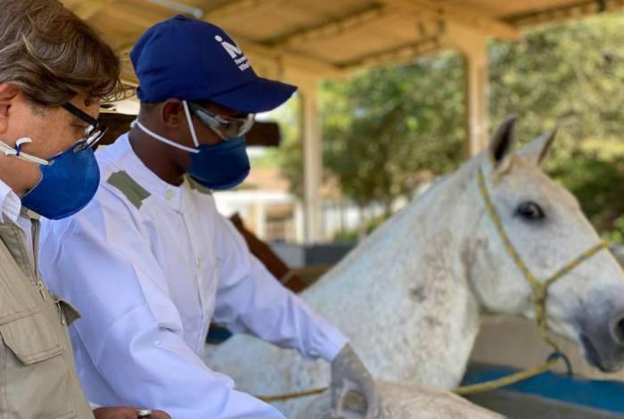 1 cavalos soro 0 18871047 - Soro obtido de cavalos pode ser até 100 vezes mais potente contra a covid-19