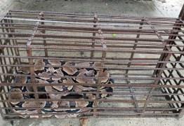 Polícia Militar Ambiental resgata 88 cobras em julho