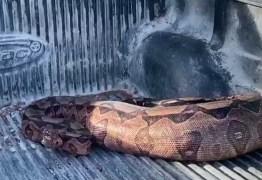 Número de cobras resgatadas aumenta mais de 100% em relação a 2019, em João Pessoa