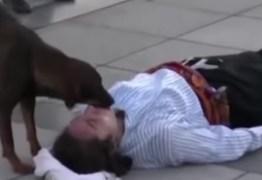 Cão invade peça e tenta salvar ator que fingia estar machucado; VEJA VÍDEO